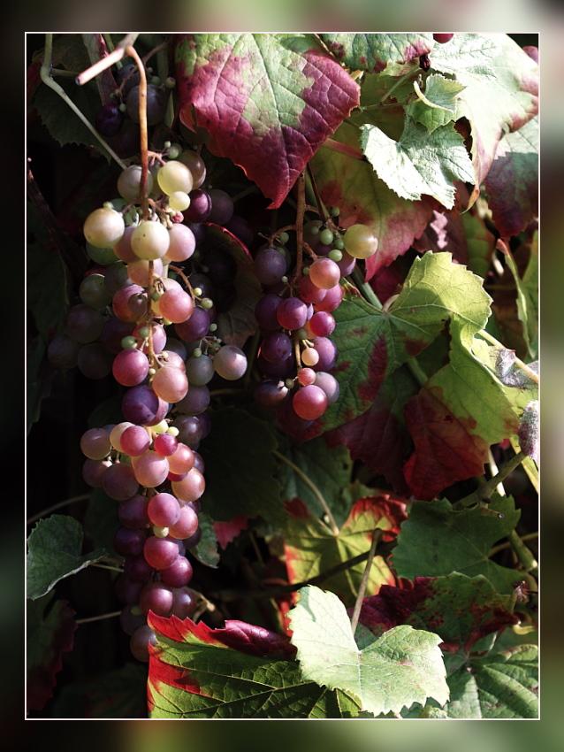 Weiss-, Rose- oder doch Rotwein?