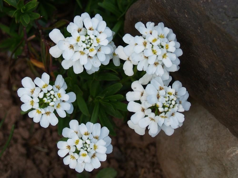 Weiß Schönheit