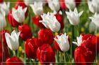 Weiß und Rot