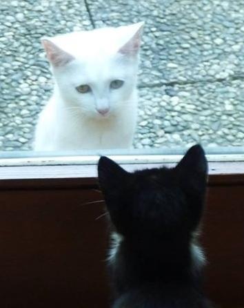 Weiss und Schwarz