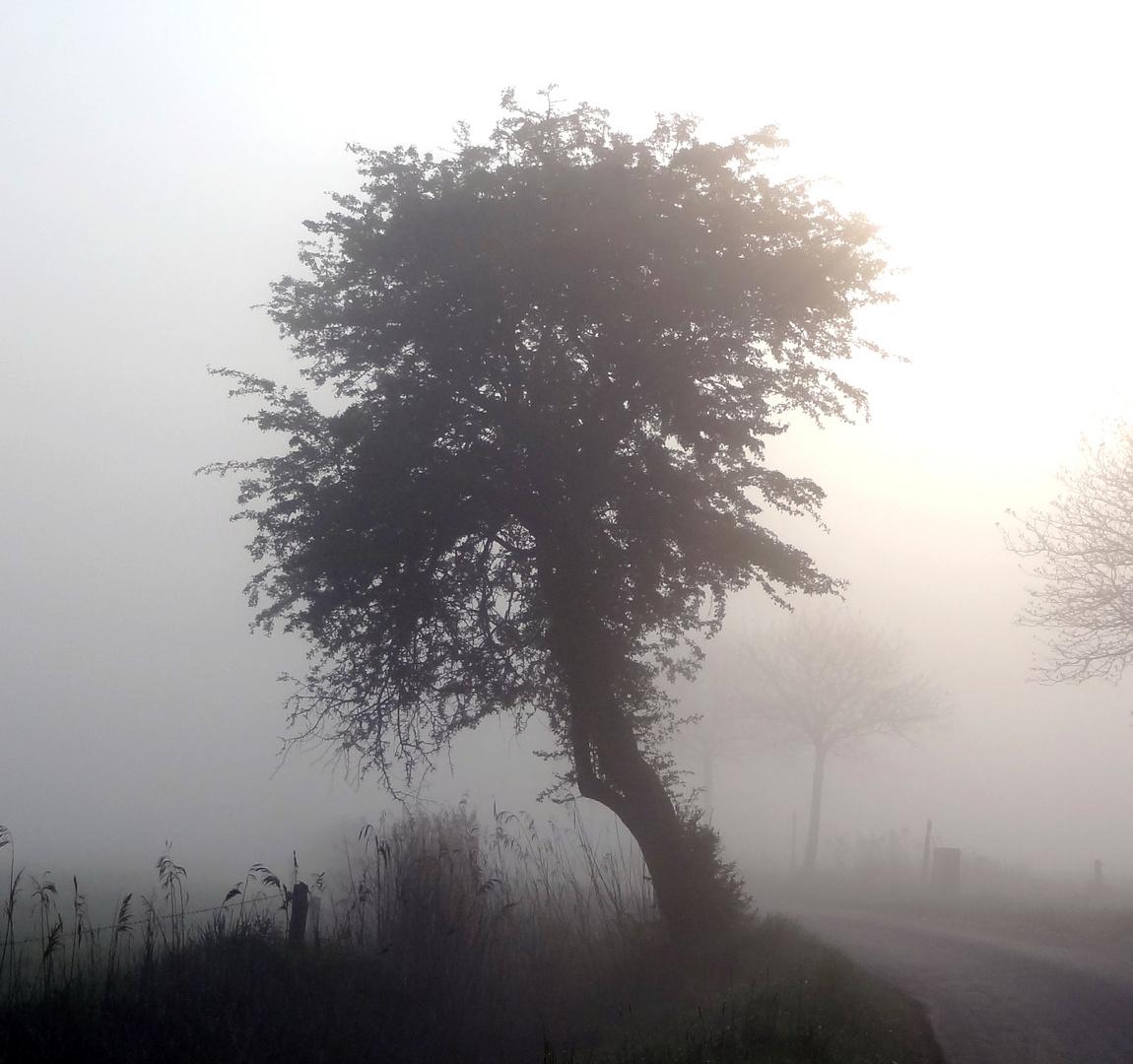 Weißdorn im Nebel