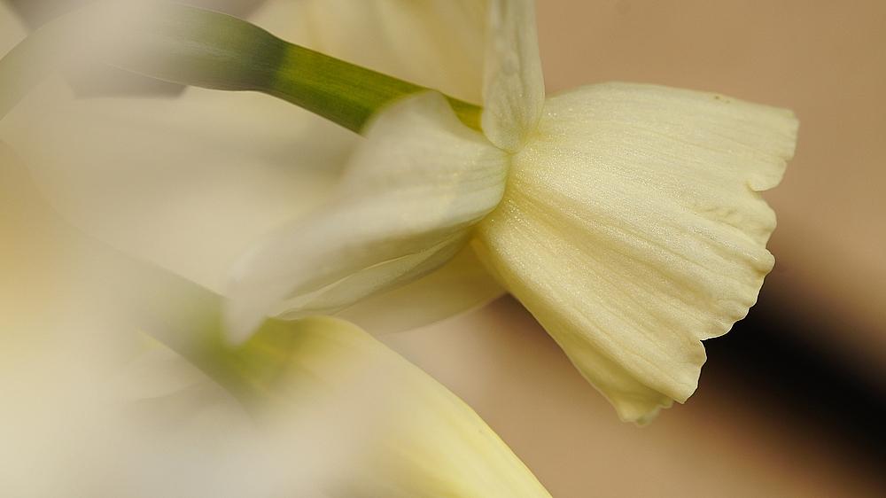 - weiße Blüte -