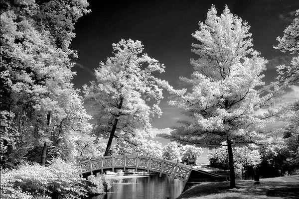 Weiße Brücke im Wörlitzer Park