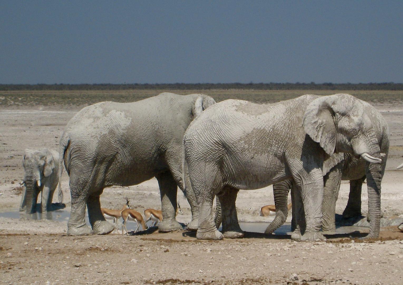Weiße Elefanten?
