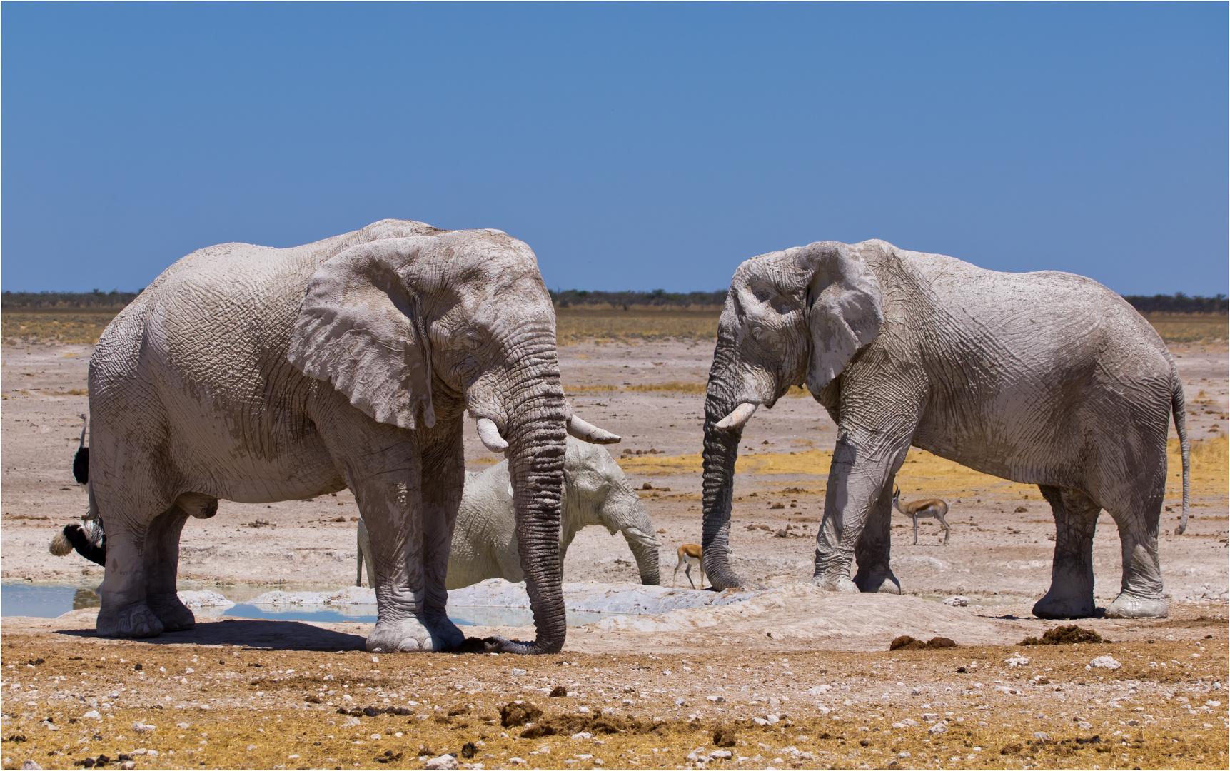 weisse Elefanten