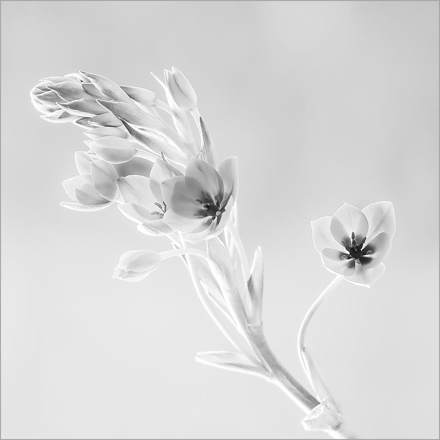 weiße Fresie ;-)