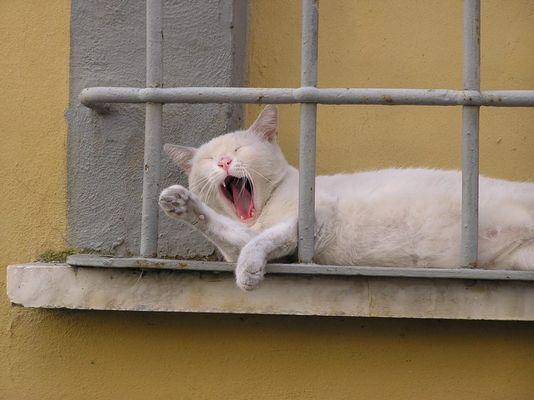 Weiße Katze in der Toskana