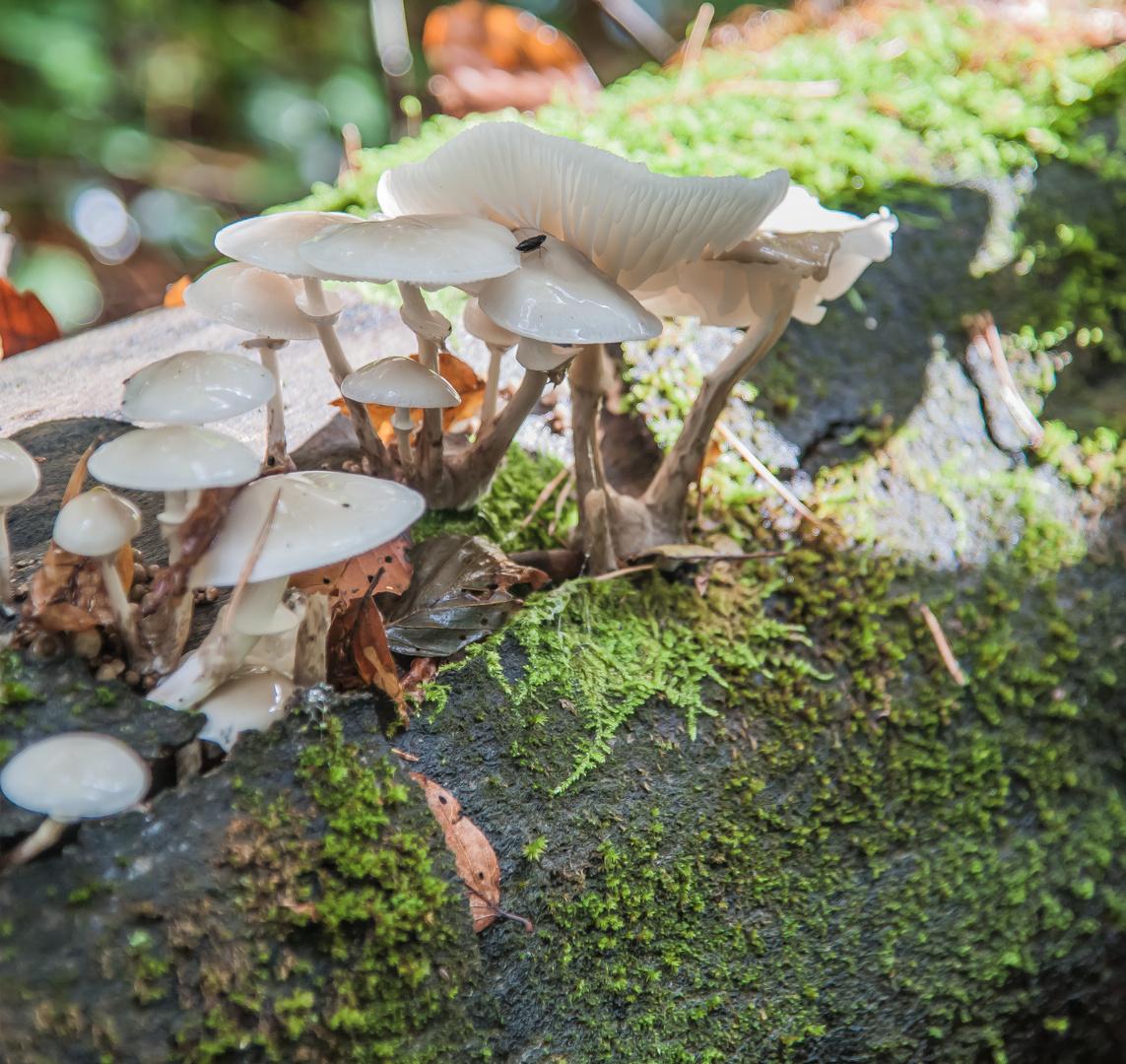 Weisse Pilze