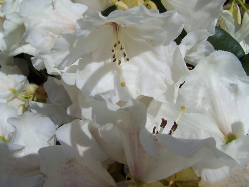 weiße pracht