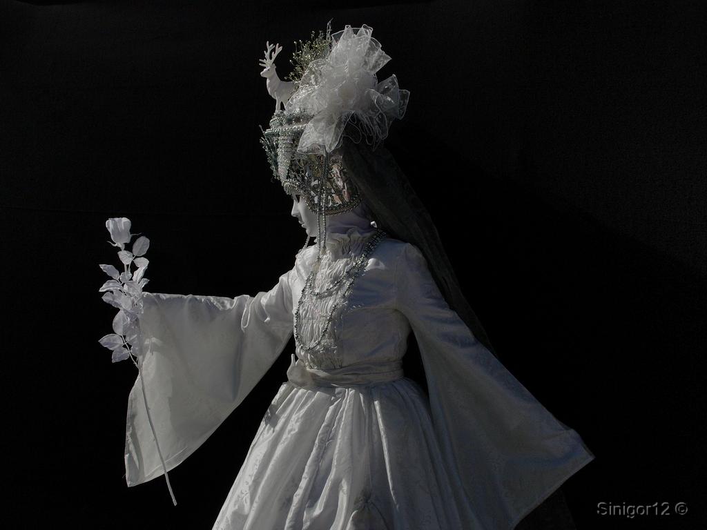 Weiße Rose der Königin
