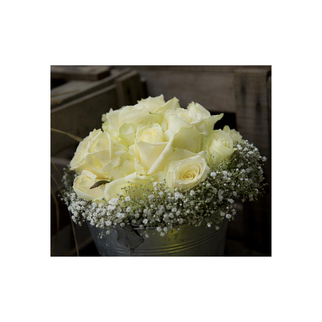 Weiße Rosen....