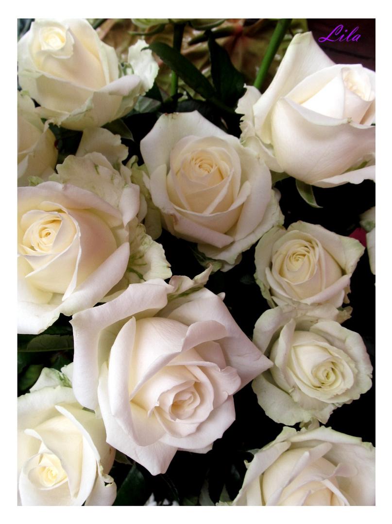 weisse Rosen aus ..................................