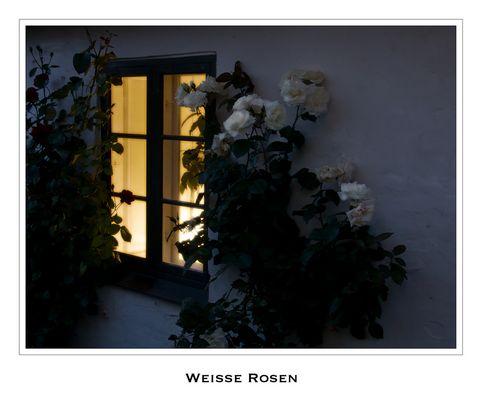 Weiße Rosen vorm Fenster