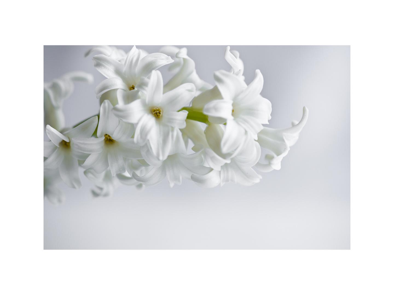 Weiße Schönheit.....