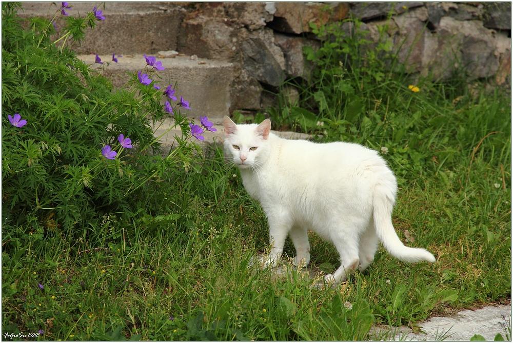 Weiße Schönheit ...