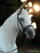 Weiße Schönheit im Morgenlicht