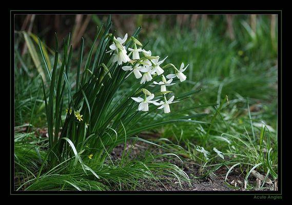 Weiße Schönheiten an frischem Grün