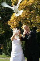 Weiße Tauben2