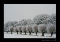 Weiße Weiden