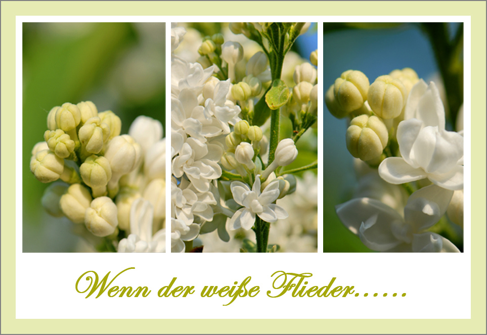 """""""Weißer Flieder"""""""