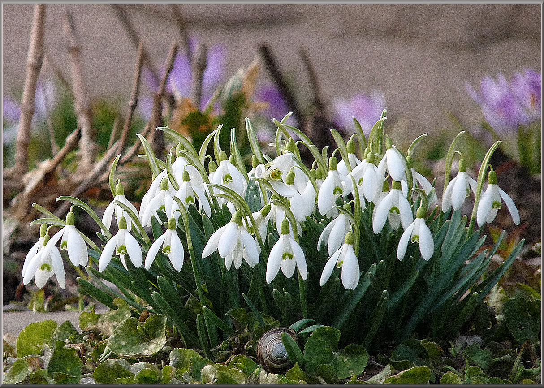 Weisser Frühling