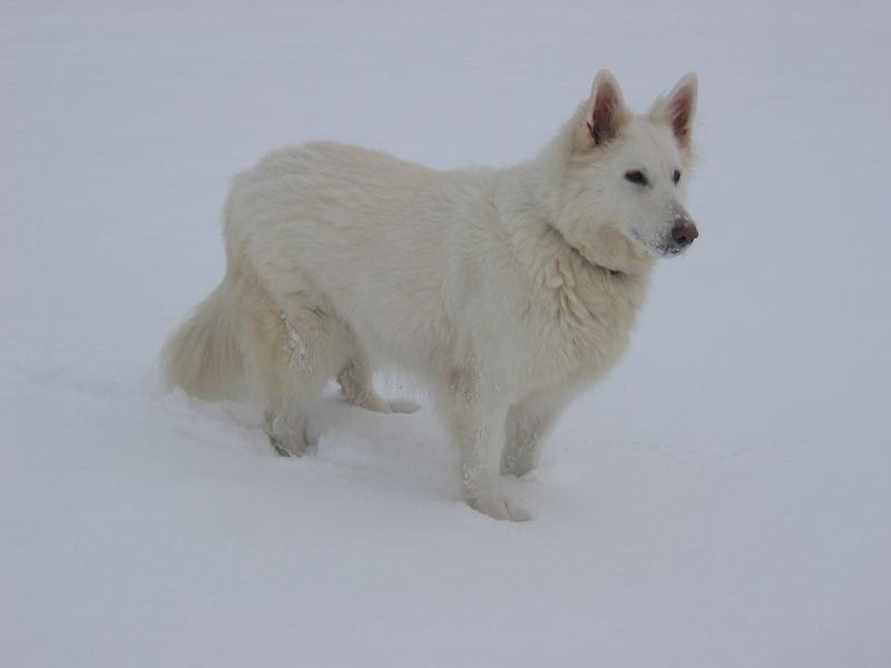 Weißer Hund auf weißem Grund :-)