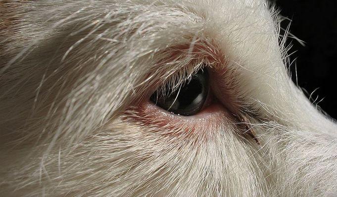 Weißer Hund, weiser Blick...