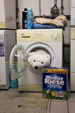 Weißer Riese in der Waschmaschine - Bärenstark!