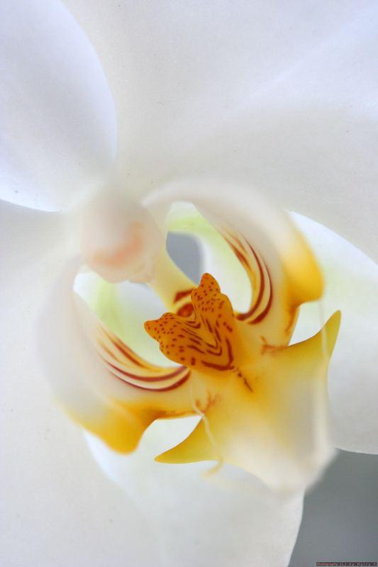 Weißer Schatz