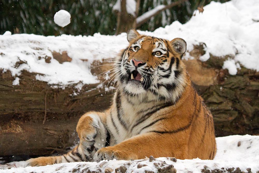 weißer Spielball