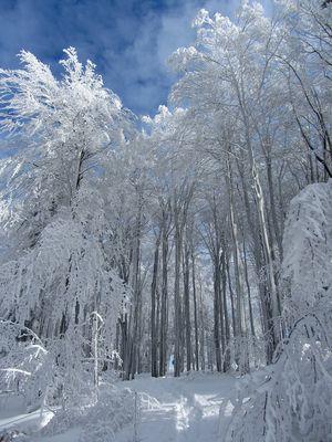 Weißer Wald