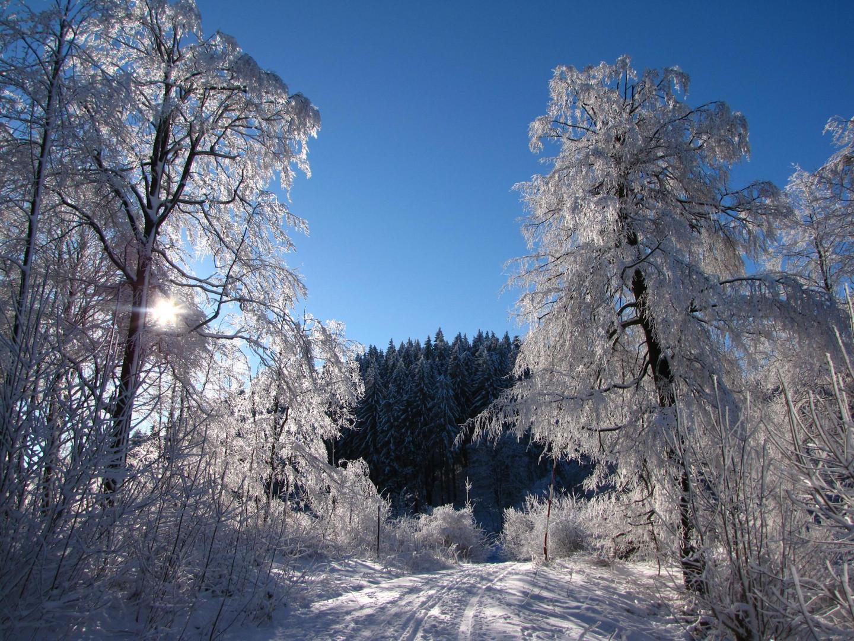Weißer Zauberwald
