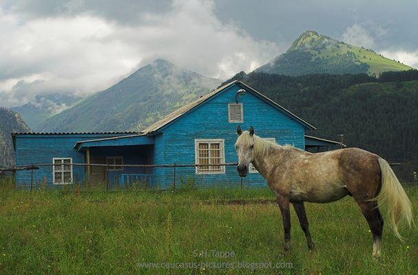 Weißes Pferd vor blauem Haus