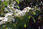 Weißgrün