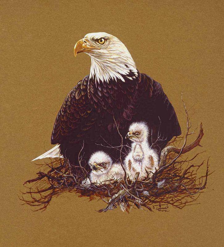 Weißkopfseeadler mit Jungen (Gemälde)