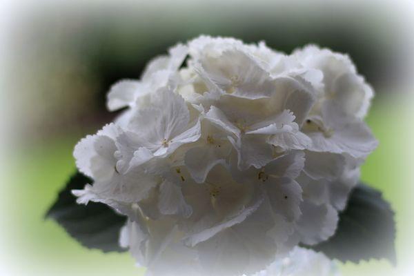 Weiß...m. Schattenwirkung