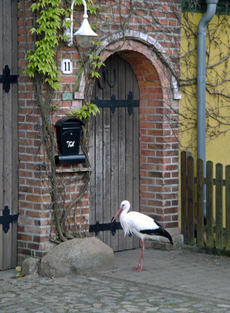 Weißstorch & Haustür
