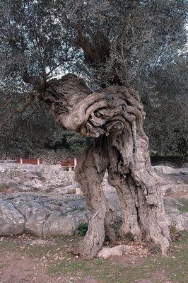 weit über 200 Jahre alt