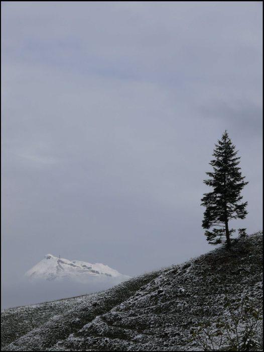 Weiterer Blick vom Vorsäß Boden auf den Diedamskopf im Bregenzerwald
