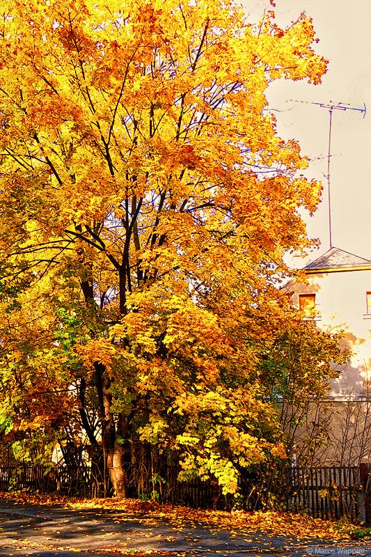 weiteres Herbstbild