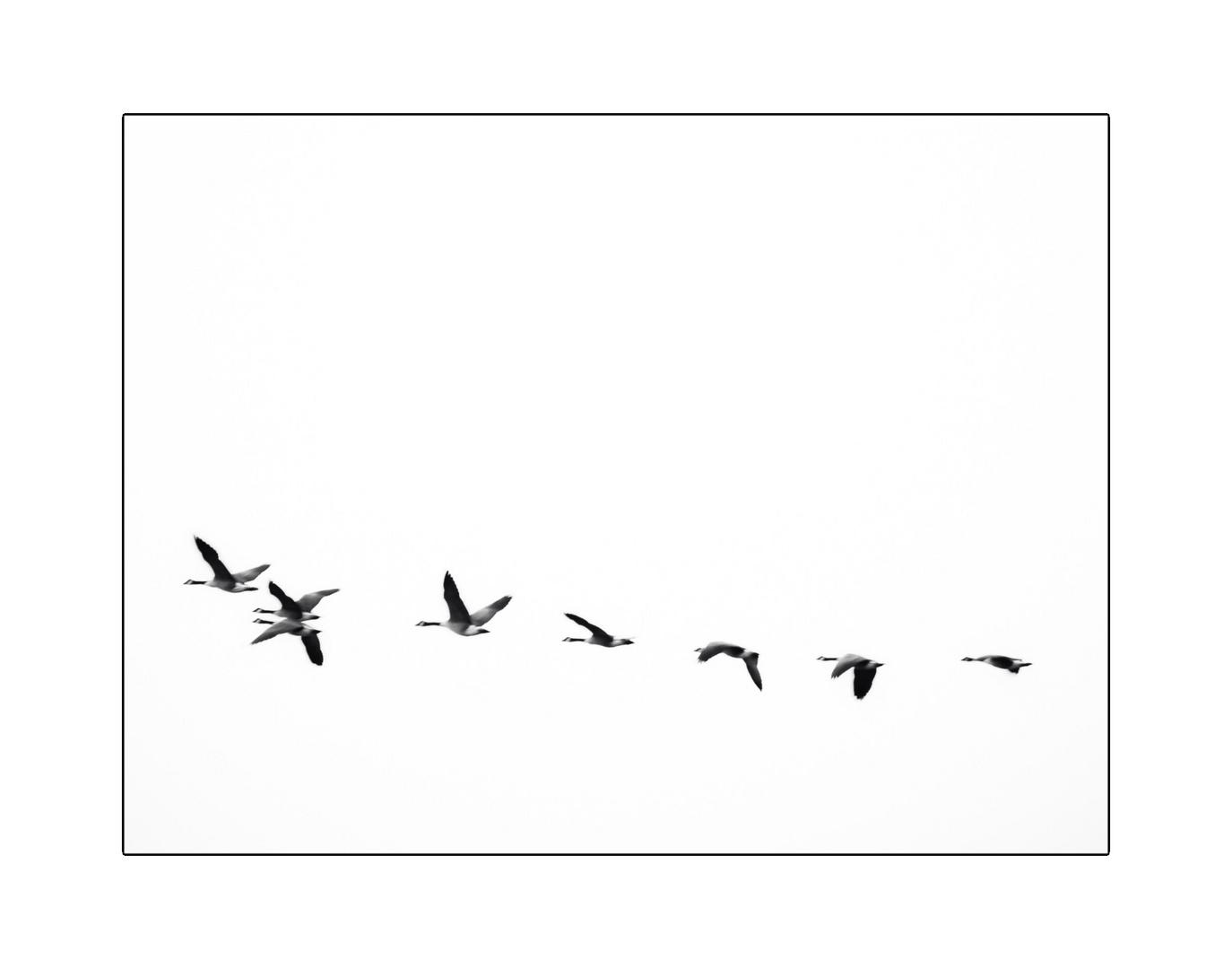 weiterflug ...