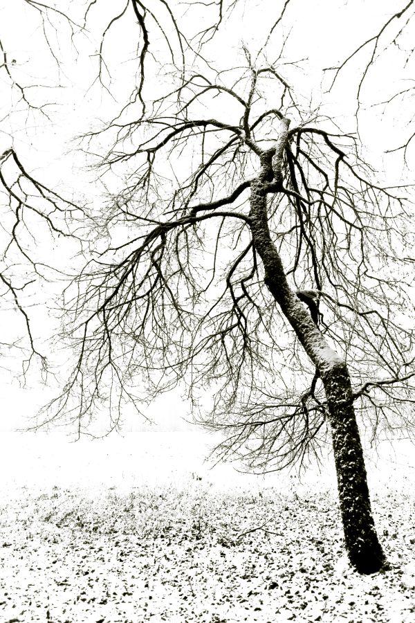 Weites Feld - kahler Baum