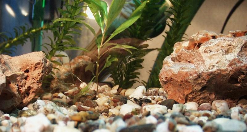 Weitwinkelwurm sieht das Aquarium