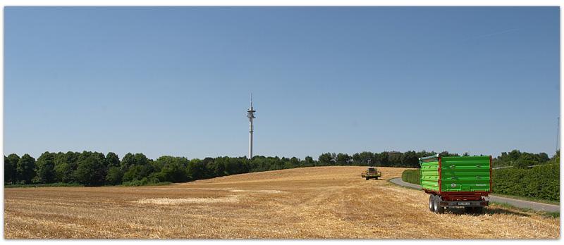 Weizenernte im Osten von Recklinghausen