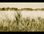 ~ Weizen....hell ~