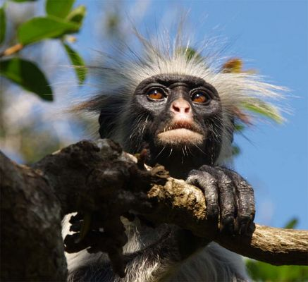 welch ein Affengesicht
