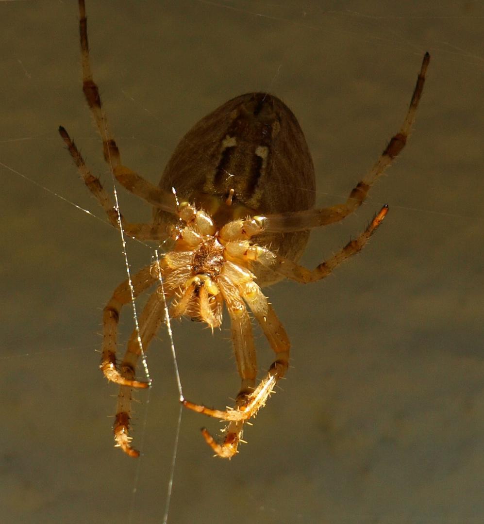 Welch ein Kreuz mit der Spinne
