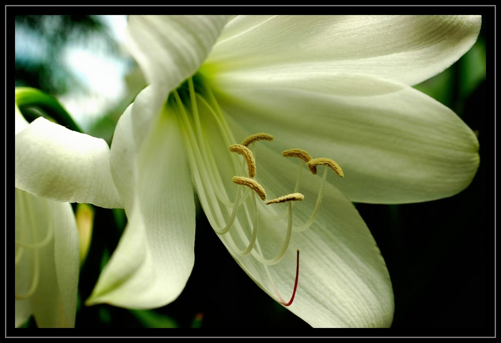 Welche Blüte ist das?