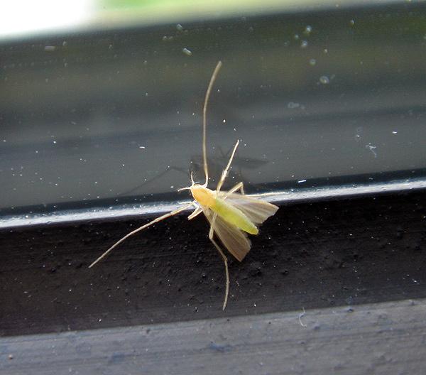 Welche Fliege ist das ?