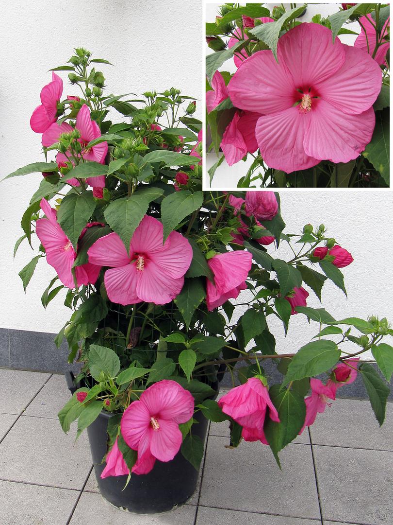 Welche Pflanze?